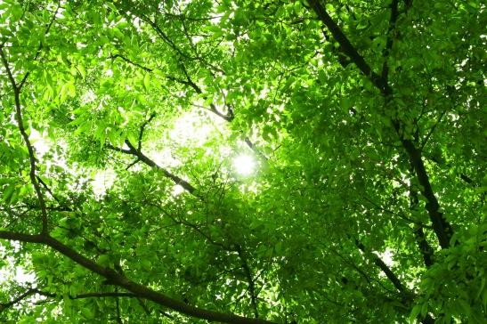 ◎tree_woods_00001